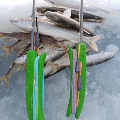 Rod with two lures for rainbow smelt/saffron cod fishing