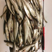 Удилище RX-5, оснащённое гирляндой из разных блёсен с зазубриной