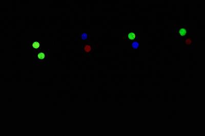"Удилище RX-5 (81 см) с ""Питерскими-мормышками"""